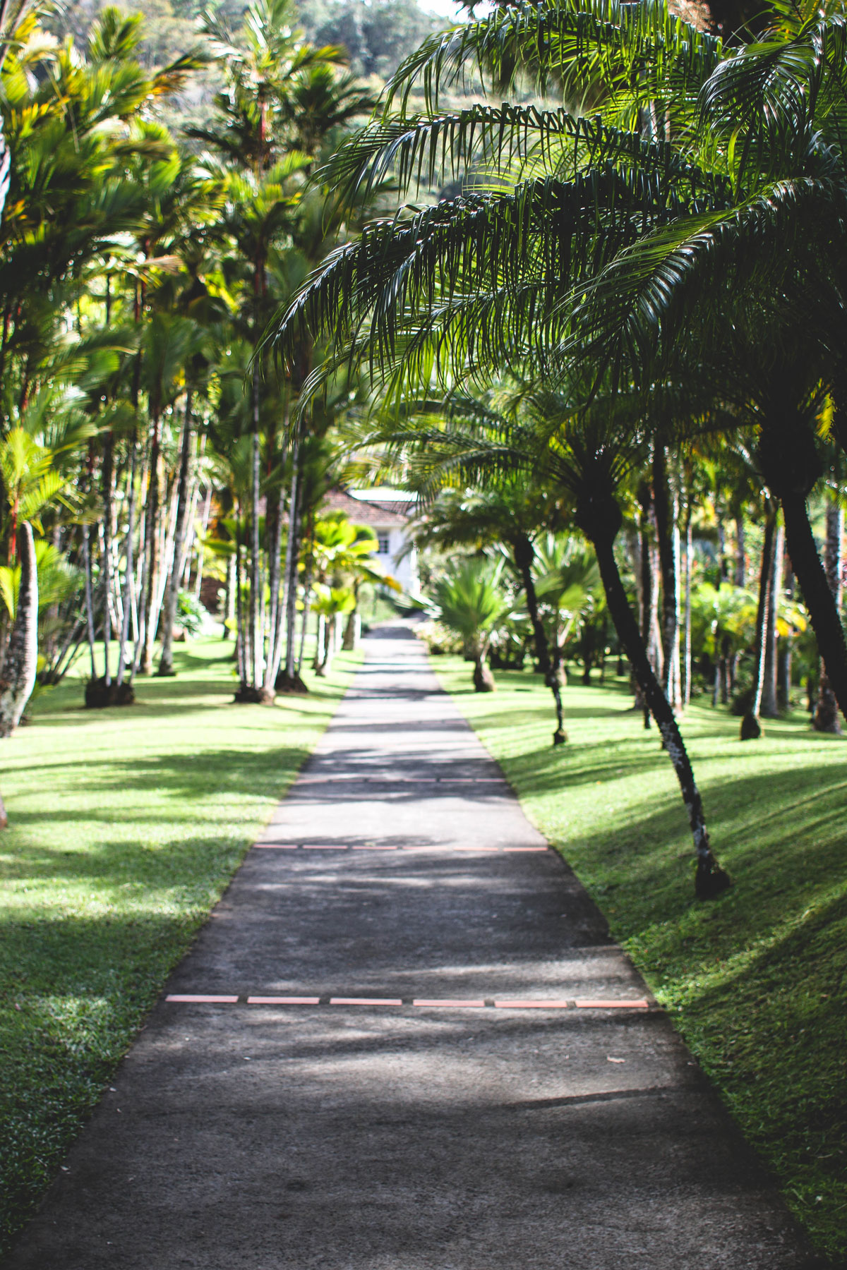 jardin de balata martinique marie and mood