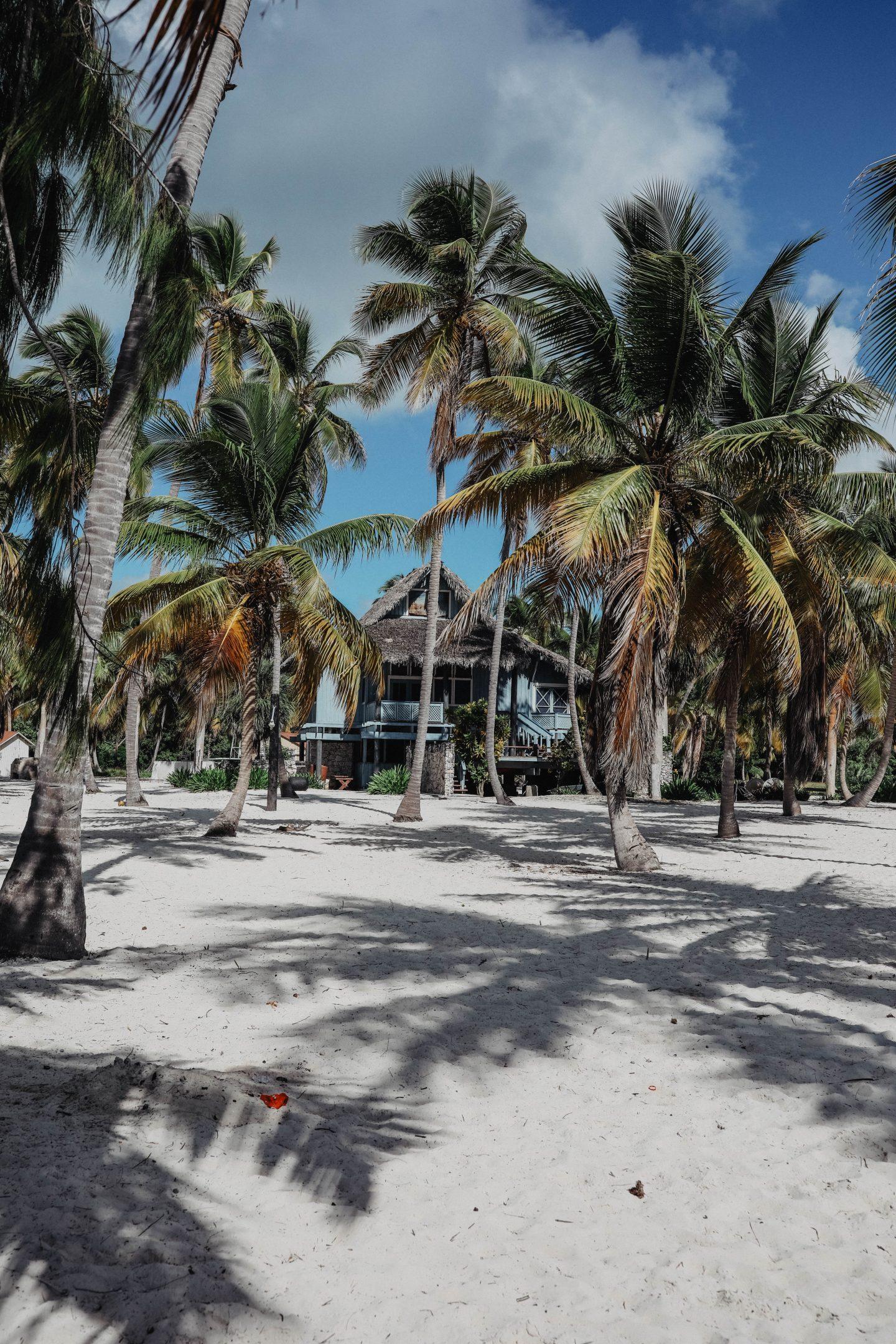 Palmiers île de Saona marie and mood blog