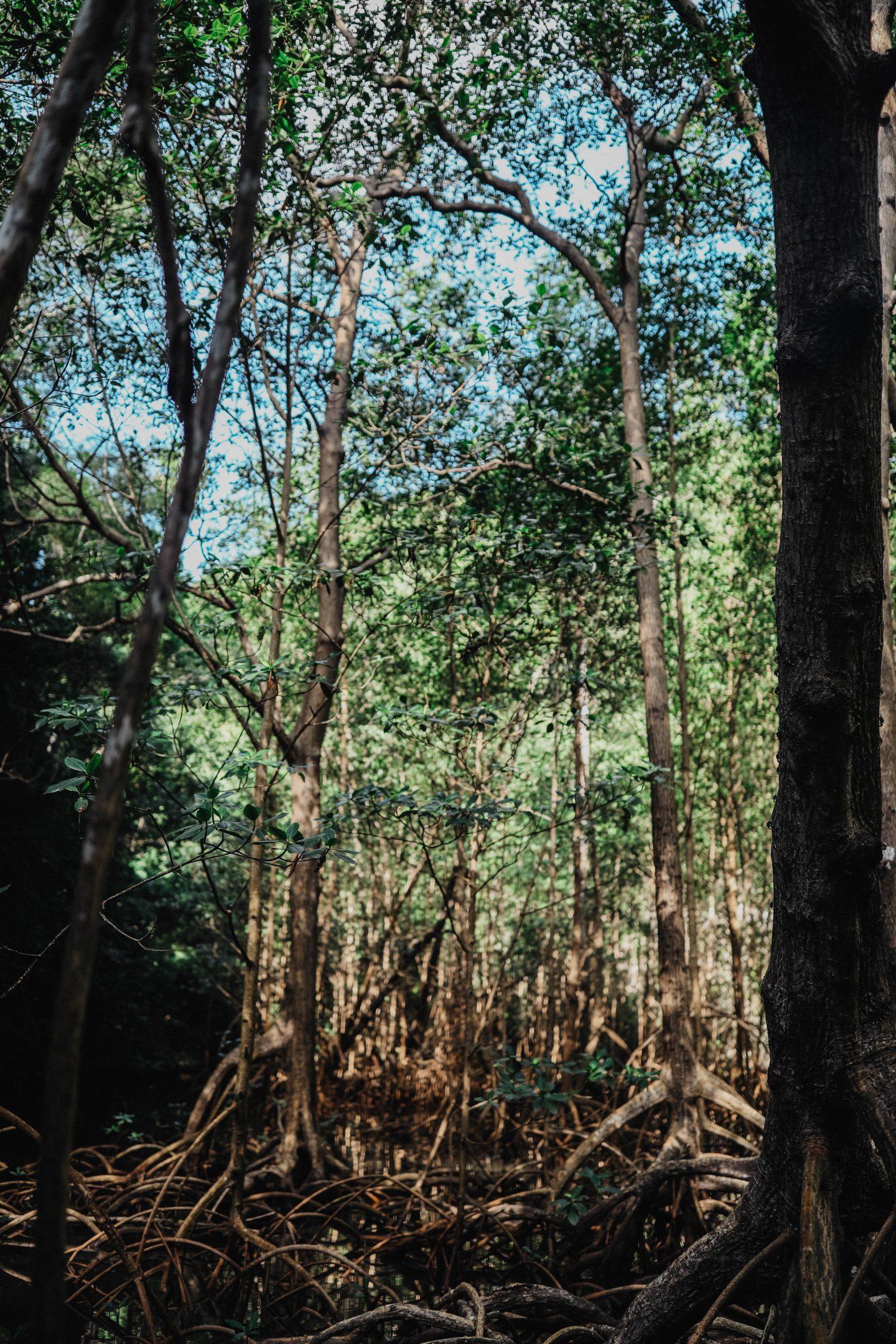 Mangrove République Dominicaine marie and mood road trip
